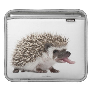 Four-toed Hedgehog - Atelerix albiventris Sleeve For iPads