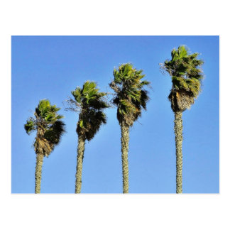 Four Trees In Point Loma Postcard