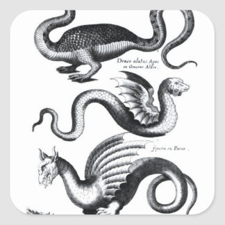 Four types of dragon square sticker