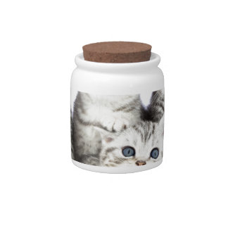 Four young cats sitting in wooden bowl on white candy jar