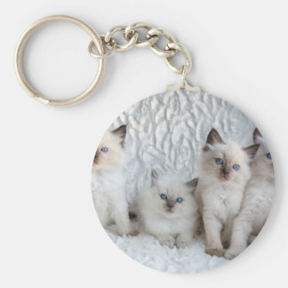 Four young Ragdoll cats sitting in a row Keychain