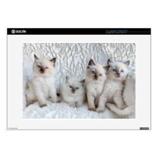 Four young Ragdoll cats sitting in a row Laptop Decal