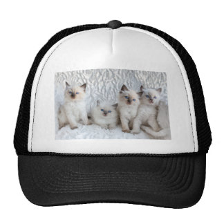Four young Ragdoll cats sitting in a row Trucker Hat