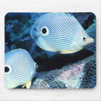 Foureye butterflyfishes mouse pad