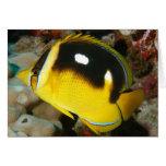 Fourspot Butterflyfish Card