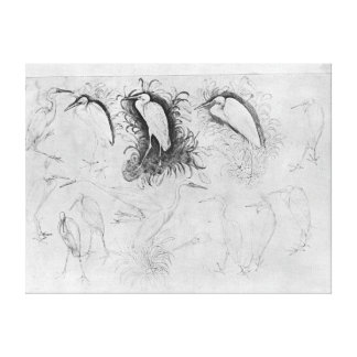 Fourteen egrets, from the The Vallardi Album Canvas Print