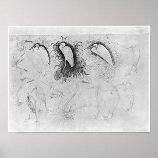 Fourteen egrets, from the The Vallardi Album Poster