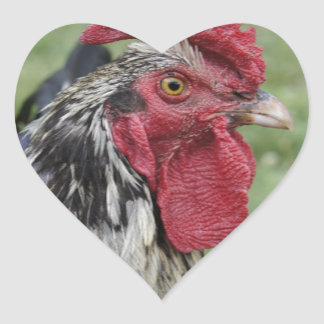 Fowl Face Heart Sticker