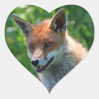 fox al pegatina hermoso rojo del retrato de la fot
