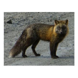 Fox Aleutian en el camino, isla de Unalaska Postal