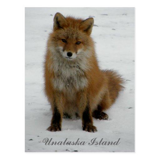 Fox Aleutian en el invierno, isla de Unalaska Tarjeta Postal