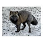 Fox Aleutian en la isla de Unalaska Tarjeta Postal