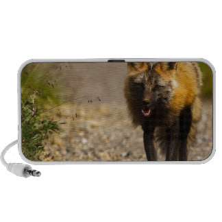 Fox Animal Office Shower Party Art iPod Speakers