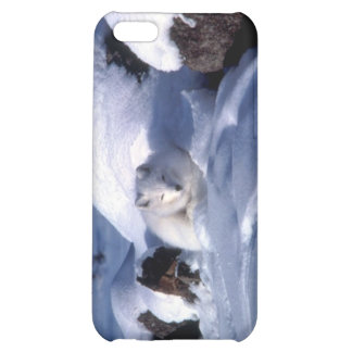 Fox ártico americano