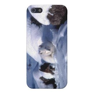 Fox ártico americano iPhone 5 coberturas