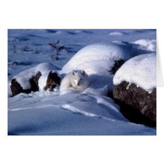 Fox ártico americano tarjeta pequeña