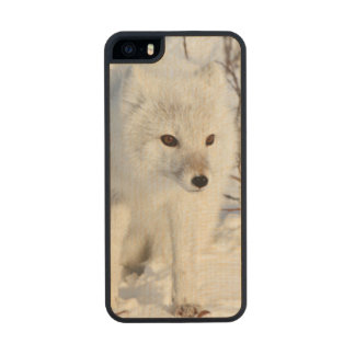 Fox ártico, área de la gestión de la fauna de funda de arce carved® para iPhone 5 slim