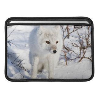 Fox ártico, área de la gestión de la fauna de fundas para macbook air