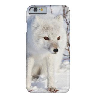 Fox ártico, área de la gestión de la fauna de funda de iPhone 6 barely there