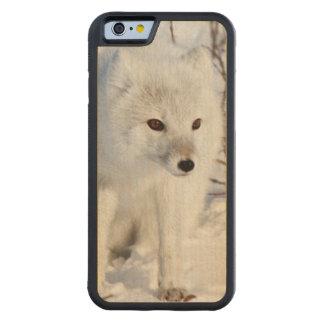Fox ártico, área de la gestión de la fauna de funda de iPhone 6 bumper arce