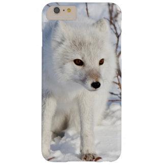 Fox ártico, área de la gestión de la fauna de funda para iPhone 6 plus barely there