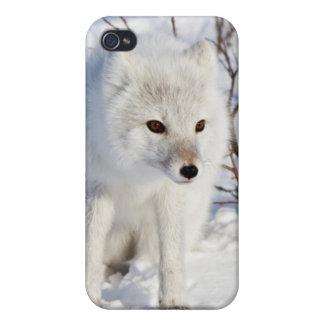 Fox ártico, área de la gestión de la fauna de iPhone 4 funda
