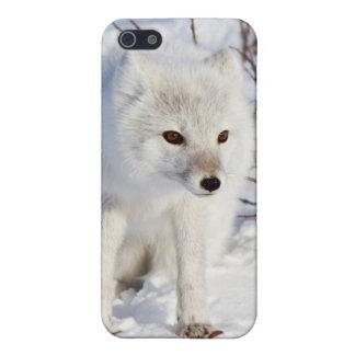 Fox ártico, área de la gestión de la fauna de iPhone 5 carcasas