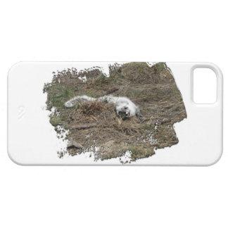 Fox ártico de AFOTG en la tierra iPhone 5 Cobertura
