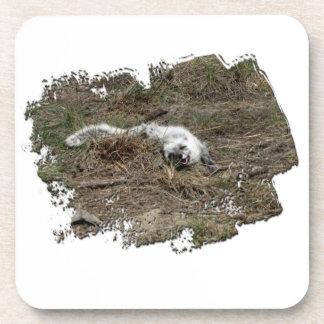 Fox ártico de AFOTG en la tierra Posavasos
