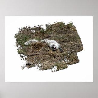 Fox ártico de AFOTG en la tierra Poster