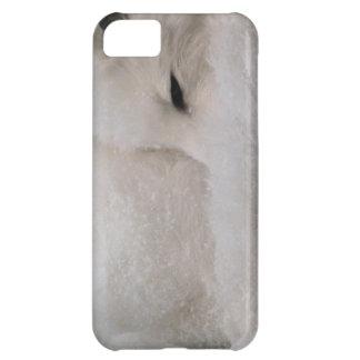 Fox ártico el dormir