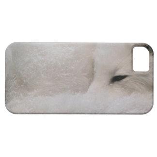Fox ártico el dormir iPhone 5 protectores