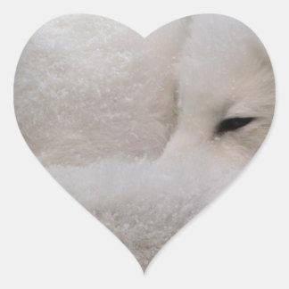 Fox ártico el dormir etiquetas
