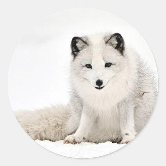 Fox ártico en la nieve etiquetas redondas