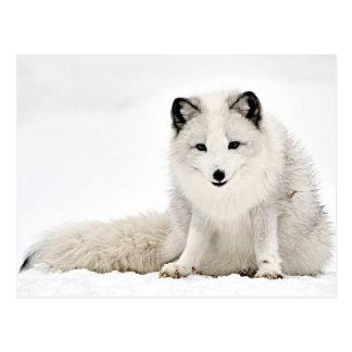 Fox ártico en la nieve tarjeta postal