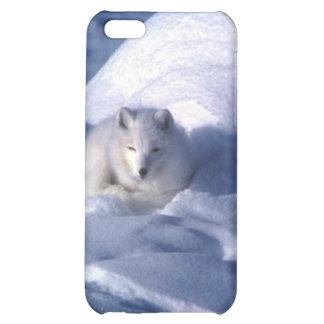 Fox ártico en nieve