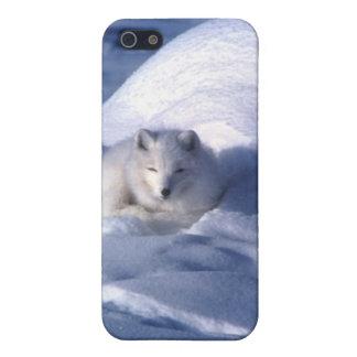 Fox ártico en nieve iPhone 5 cobertura