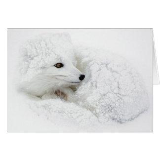 Fox ártico encrespado para arriba en invierno tarjeta de felicitación
