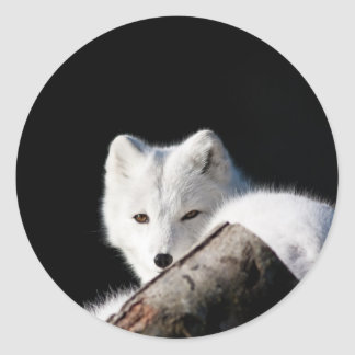 Fox ártico etiquetas
