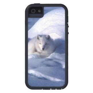 Fox ártico iPhone 5 Case-Mate cobertura