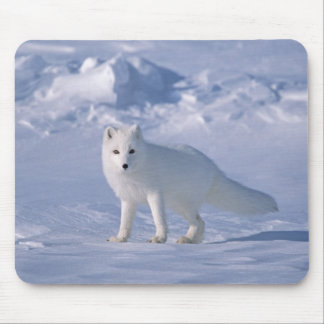 Fox ártico mousepad