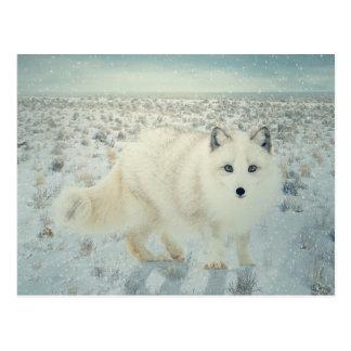 Fox ártico postales