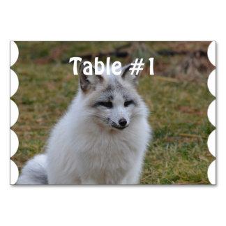 Fox blanco adorable