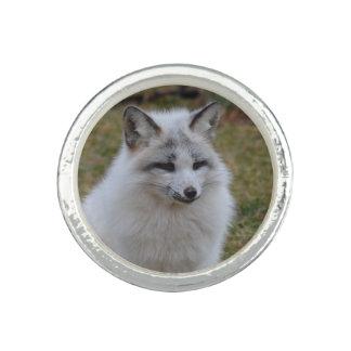 Fox blanco adorable anillo