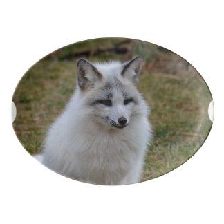Fox blanco adorable badeja de porcelana