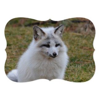 "Fox blanco adorable invitación 5"" x 7"""