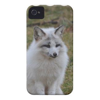 Fox blanco adorable iPhone 4 cobertura
