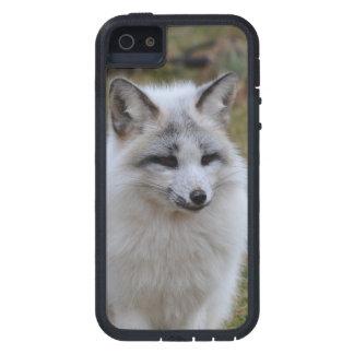Fox blanco adorable iPhone 5 carcasa