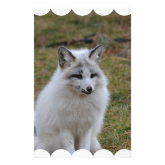 Fox blanco adorable personalized stationery