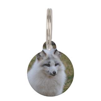 Fox blanco adorable placa para mascotas